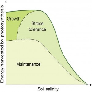New salinity tolerance review: Munns and Gilliham (2015)